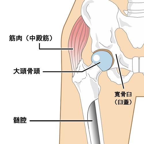 股関節 股関節痛 関節